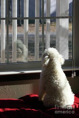 Reflecting Dog Daze Poster