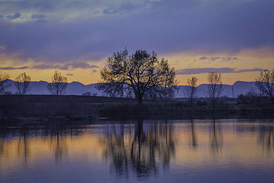 Reflecting Tree Poster by Trish Kusal