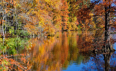 Reflected Fall Foliage Poster