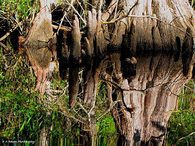 Reflection Of Cypress Knees Poster by Barbara Bowen