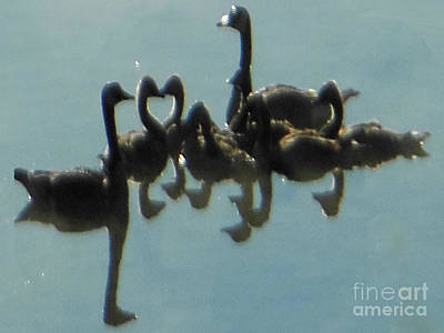 Reflection Of Geese Poster