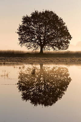 Reflection Of Trees In Lake In Light Of Rising Sun, Netherlands Poster