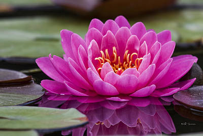 Reflections Of A Waterlily Poster by Jeff Swanson