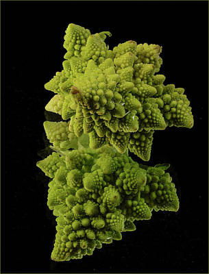 Reflections On Broccoli Poster by Jean Noren