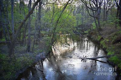 Poster featuring the photograph Reflections On The Congaree Creek by Skip Willits