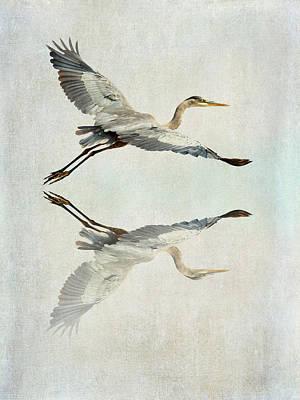 Reflective Flight Poster by Fraida Gutovich