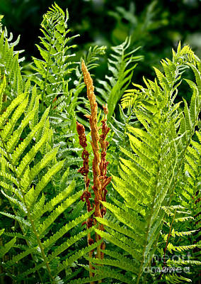 Refreshing Fern In The Woodland Garden Poster