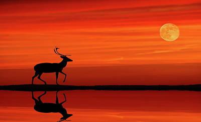 Reindeer By Moonlight Poster