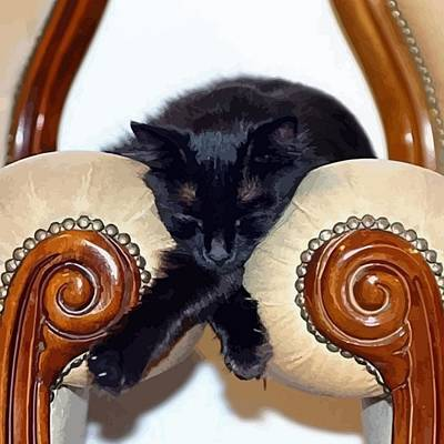 Relaxed Black Cat Sleeping Between Two Chairs Poster by Tracey Harrington-Simpson