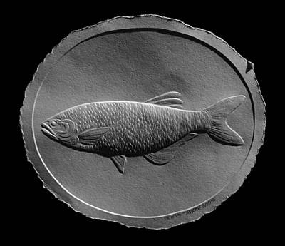 Relief Drawing Of A Freshwater Fish Poster