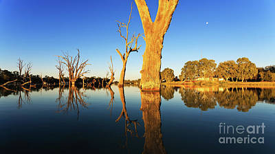 Poster featuring the photograph Renamrk Murray River South Australia by Bill Robinson