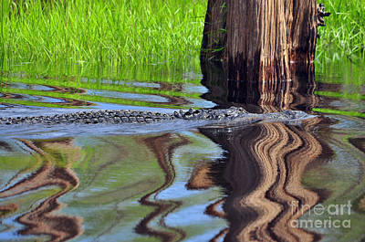 Poster featuring the photograph Reptile Ripples by Al Powell Photography USA