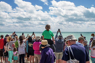 Poster featuring the photograph Rescued Turtle Being Released At Higgs Beach In Key West by Bob Slitzan