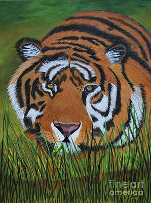 Resting Tiger  Poster by Myrna Walsh