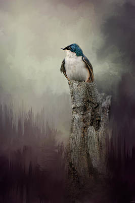 Resting Tree Swallow Poster by Jai Johnson