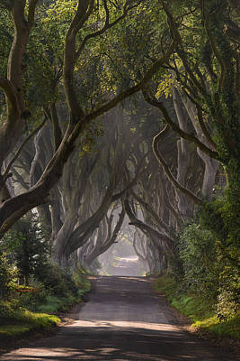 Return To The Dark Hedges Poster by Andy Gibson