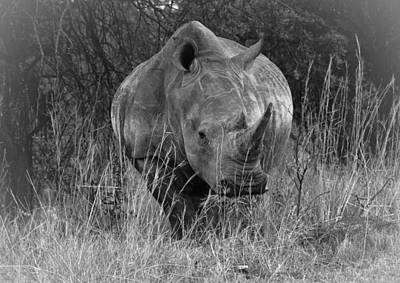 Rhino Poster by Patrick Kain