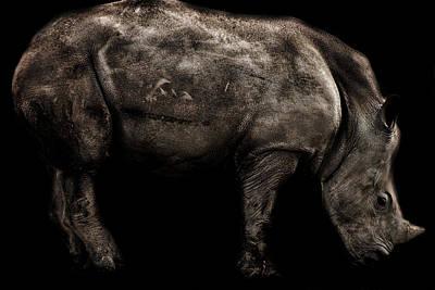 Rhino Portrait Poster by Martin Newman