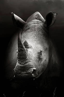 Rhinoceros Portrait Poster