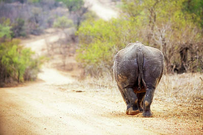 Rhinocerous Walking Away Down Road Poster