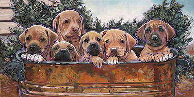 Rhodesian Ridgeback Puppies Poster by Nadi Spencer