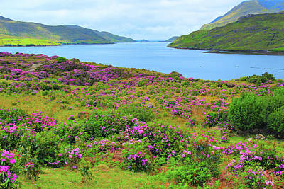 Rhododendrons And Killary Harbor 1 Poster