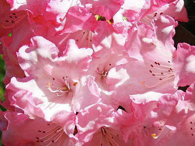 Rhododendrons Floral Art Prints Pink Rhodies Baslee Troutman Poster by Baslee Troutman