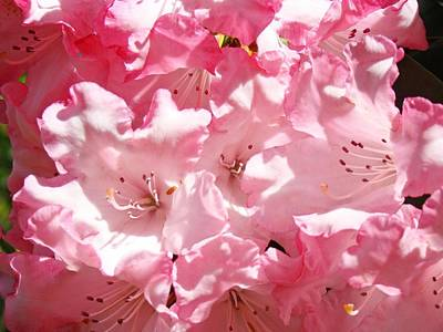 Rhododendrons Flowers Art Print Pink Rhodies Baslee Troutman Poster by Baslee Troutman