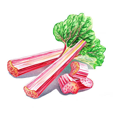 Poster featuring the painting Rhubarb Stalks by Irina Sztukowski