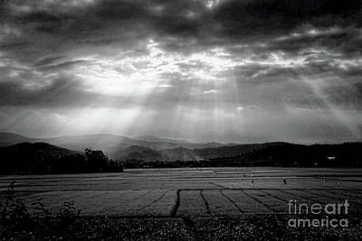 Rice Field Rays  Poster by Chuck Kuhn