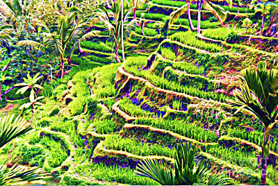 Rice Terraces Of Bali Poster by Jerome Stumphauzer