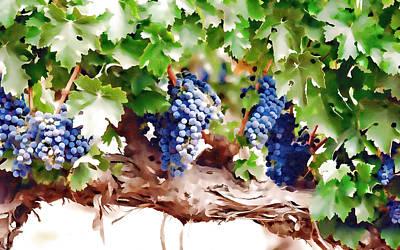Ripe Grapes Moldova Poster