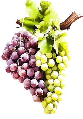 Ripe Red And Green Grapes  Poster