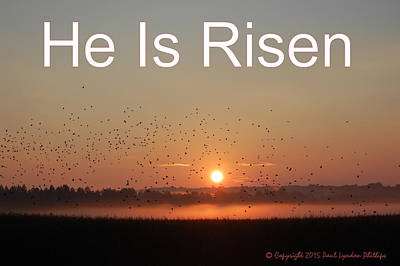 Risen As He Said Poster by Paul Lyndon Phillips