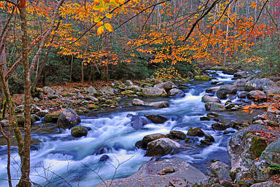 River Birch Overhangs Big Creek Poster by Alan Lenk