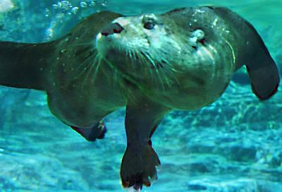 River Otter Poster