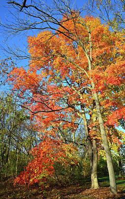 Poster featuring the photograph River Road Maples by Ray Mathis