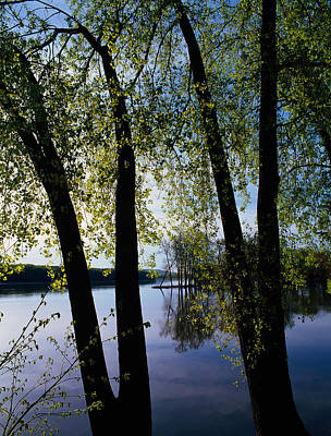 Riverview Through Budding Trees Poster