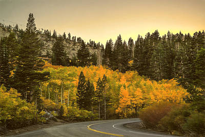 Road In Autum Poster by Maria Coulson