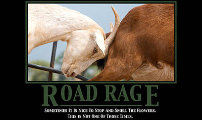 Road Rage Poster by Lisa Knechtel