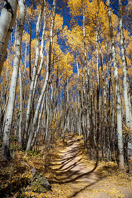 Road Through Aspens Poster by Michael J Bauer