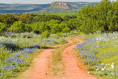 Road To Bluebonnet Heaven - Willow City Loop Texas Hill Country Llano Fredericksburg Poster by Silvio Ligutti