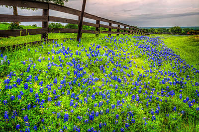 Roadside Texas Bluebonnets Poster by David and Carol Kelly