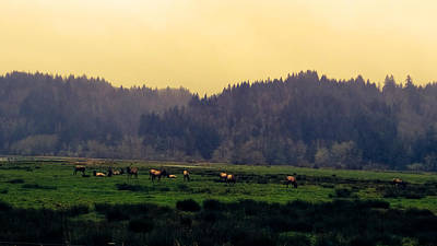 Roaming Elk Poster by Pacific Northwest Imagery