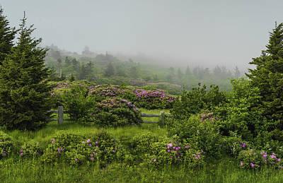 Roan Mountain Spring Poster