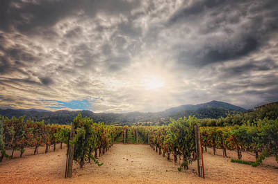 Winery Vineyard - Napa Valley California Poster by Jennifer Rondinelli Reilly - Fine Art Photography