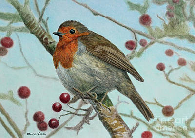 Robin In A Hawthorn Tree Poster by Elaine Jones