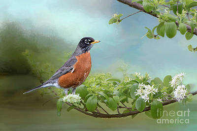 Robin In Chinese Fringe Tree Poster by Bonnie Barry