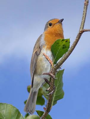 Robin In Eden Poster