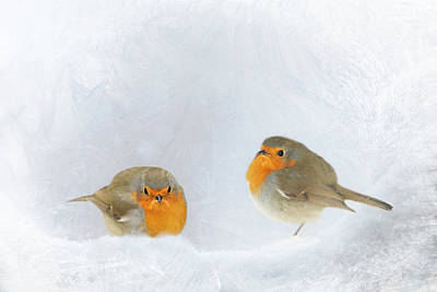 Robin In Snow Poster